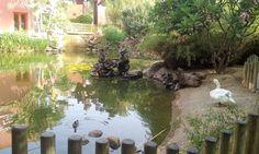 Parque de la Paloma Benalmadena, Aquarium, Parks, Animales, Goldfish Bowl, Aquarium Fish Tank, Aquarius, Fish Tank