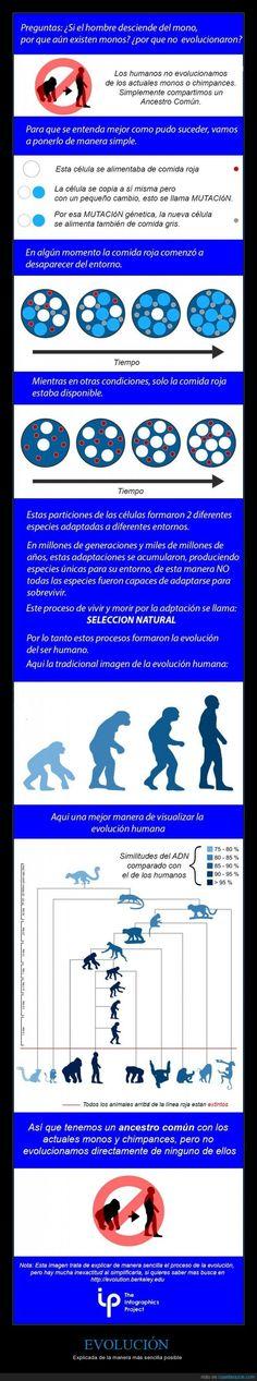 EVOLUCIÓN - Explicada de la manera más sencilla posible