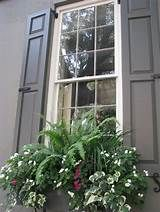 Exterior Window Shades Plants 25 Ideas For 2019 Window Box Plants, Window Box Flowers, Window Planter Boxes, Planter Ideas, Exterior House Siding, Contemporary Front Doors, Backyard Buildings, Outdoor Flowers, Annual Plants