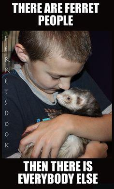 Ferrets https://www.facebook.com/YourEverydayFerretFerretsDook