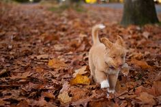 Denver, A Novia Scotia Duck Toller, Might Be The World's Cutest Puppy