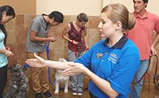 Dog training at PetSmart includes classes for all levels and ages! Our accredited dog trainers teach positive reinforcement techniques in a fun, interactive environment. Dog Training Classes, Training Courses, Training Tips, Petsmart Dog Training, Positive Reinforcement, Best Dogs, Behavior, Your Dog, Puppies