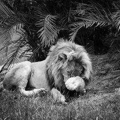 Josh Iremonger Adventure & Safaris