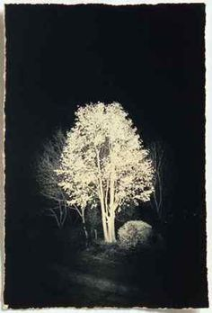 masao yamamoto (night scene)   'Light and Dark'  I like the way it looks like the tree is the emitter of all the light. It just seems like a very positive image. It would be interesting to not have the source of light as an actual light and instead having it as another unexpected object.