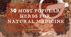 "Herbs are finally getting the recognition they deserve even though we all know that plants and herbs are the foundation for the pharmaceutical industry. Years ago, anyone interested in using or ""prescribing"" plants for medicinal..."