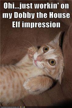 Oh, SOOO cute! http://sulia.com/channel/cats/f/44299ce7-033d-4f4d-b4b3-603fee38cf00/?pinner=119866023