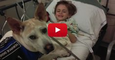 Nothing Prevented This Little Boy's Deadly Illness - Until He Met A Dog Who Saved His Life.
