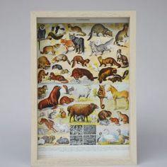 cuadro-animales-1