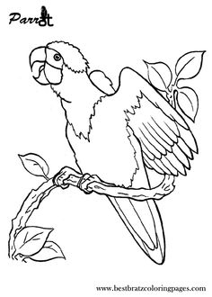 Click To See Printable Version Of Two African Grey Parrots