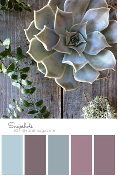Smokey toned blue succulent flat lay with lichen and fern on barn board with rose color palette. From Rural magazine's Instagram feed visit Rural magazine for more info.