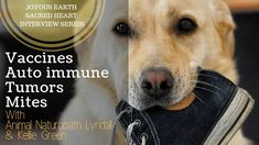 How to naturally care for your dogs immune system. Should you vaccinate and what to do if you do or don't to help your dog stay well. Tumors in dogs and how . Autoimmune Disease, Sacred Heart, Natural Healing, Immune System, Dogs, Nature, Animals, Naturaleza, Animales