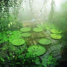 Kew botanical gardens. On my top 10 Nerdgirl destinations