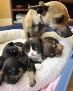 Mamãe cadelinha tem um filhotinho diferente por amor.