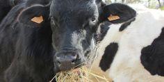 [COME AIUTARE] Arezzo: rischia la chiusura Agripunk, il santuario di animali liberati
