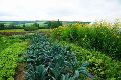 The permaculture way with plants is to find garden participants that have good symbiotic relationships with others.