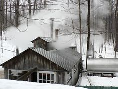 Sugar Shack, maple syrup on the way