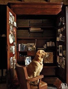 Sid, the Labrador retriever of Ralph Lauren design force Alfredo Paredes and writer Brad Goldfarb, gazes out of the study window in the couple's Manhattan penthouse.