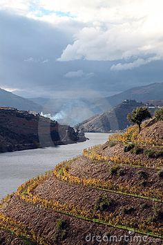 Alto Douro Wine Region, Portugal