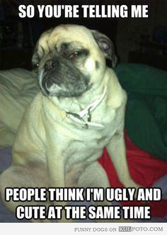 Skeptical dog. Made me think of you jajajaj you ar BEAUTIFUL little doggy <3 :3