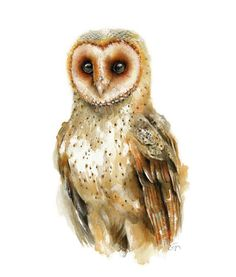 Owl watercolor - Owl Painting - Giclee Print - Home Wall Decor - Bird Watercolor Illustration. Owl Watercolor, Watercolor Animals, Watercolor Paintings, Watercolour Tips, Watercolors, Bird Paintings, Bird Illustration, Watercolor Illustration, Illustrations