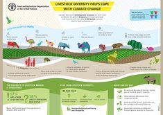 Livestock diversity helps cope with climate change