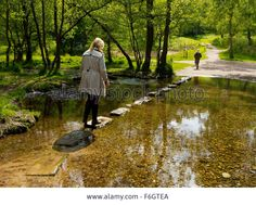 stepping stones in woodlands - Google Search