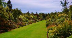 100m long double borders of NZ native plants   Broadfield NZ Landscape Garden, Canterbury, New Zealand