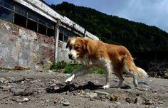 Familia Basset Hound: Holanda é o primeiro país do mundo a não ter cães ...