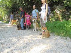 Alcuni protagonisti del dog walking