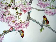 ???like the frilly flowers, too detailed??? suni watercolor cherry blossom   SOLD) Japanese Cherry Blossoms. Pen, ink, and watercolor. © Randy ...