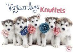 Verjaardagskaart met puppy's- Greetz Happy Birthday Pictures, Happy Birthday Quotes, Birthday Wishes, Birthday Cards, Wish Kids, Blond Amsterdam, Happy B Day, Dog Birthday, Congratulations Card