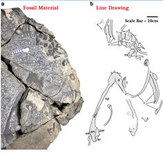 "Chinese ""Sea Dragon"" fossil hints at recovery of animal populations after extinction event."