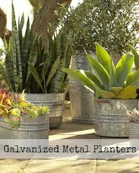 Driven By Décor: Galvanized Metal Tubs, Buckets, & Pails as Planters