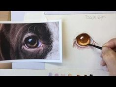 In this tutorial you will learn how to paint a dog's brown eye in watercolor, based on a photo from Pixabay. Watercolor Eyes, Watercolor Animals, Watercolor Paintings, Painting Lessons, Art Lessons, Animal Paintings, Animal Drawings, Watercolour Tutorials, Dog Art