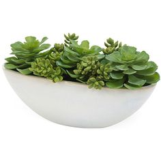 "8"" Succulents in Planter ($129) ❤ liked on Polyvore featuring home, home decor, floral decor, fillers, plants, fillers - plants, & - fillers - plant, white planter, ceramic home decor and white ceramic planter"