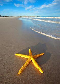 Golden yellow starfish. Sea creatures. Saltwater fish.