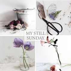 Still Sunday – Feature #24 4 pretty still life picks from the IG #mystillsundaycompetition hashtag.