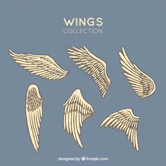 Winged logo company and icon wing flying, eagle wing brand and logotype wing bird illustration , Angel Wings Art, Art Sketches, Art Drawings, Wings Drawing, Art Tips, Painting Tips, Drawing Reference, Art Tutorials, Line Art