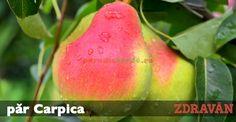 păr Carpica Paradis, Vegetables, Horsehair, Plant, Vegetable Recipes, Veggies
