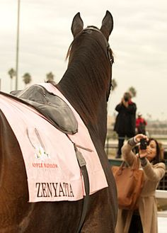 Zenyatta - I love that the photographer (Benoit Photo) captured the lady in the background taking a photo of Z