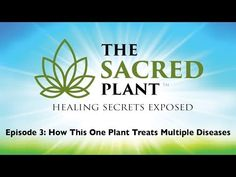 Join me as I watch 17 Doctors, 12 Experts & 18 Survivors reveal how THIS miracle plant is having a profound affect on health. Register to watch free online...