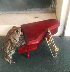 This Woman Is Photographing A Toad In Her Dollhouse Living The Dream Life Images) - World's largest collection of cat memes and other animals Cute Little Animals, Baby Animals, Funny Animals, Cute Reptiles, Reptiles And Amphibians, Frog Pictures, Frog Pics, Frog Art, Cute Frogs