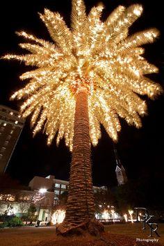palmtree lights christmas palm tree beach christmas diy christmas lights decorating - Palm Tree Christmas Decorations