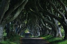 The Dark Hedges - Northern Ireland. full of beauty, mystery, romance and that old world feel.