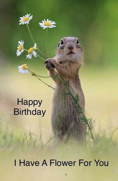 Ideas Funny Happy Birthday Meme Animals For 2019 Funny Happy Birthday Meme, Happy Birthday Wishes Quotes, Birthday Blessings, Happy Birthday Pictures, Happy Birthday Greetings, Humor Birthday, Happy Birthday Squirrel, Friendship Birthday Wishes, Ground Squirrel