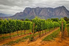 Delaire-Graff Wine Vineyards South Africa