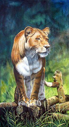 Asian Lioness by Robert David Gellion