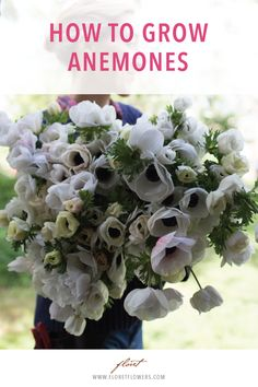 How To Grow Anemones - Floret Flowers - An eye-catching and productive spring bloom, anemones flower just three months after planting. Small Flower Gardens, Cut Flower Garden, Beautiful Flowers Garden, Flower Farm, Flower Gardening, Cut Garden, Flower Garden Plans, Stock Flower, Flower Beds