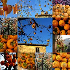 Persimmon Collage | Flickr – Condivisione di foto!