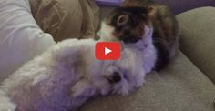 Cat Gives Her Best Friend A Much Needed Bath